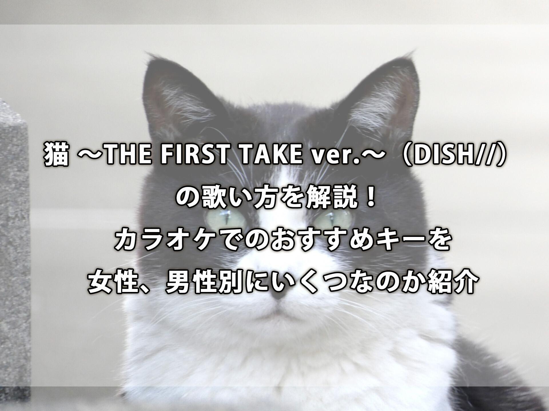 猫 歌詞 dish DISH//
